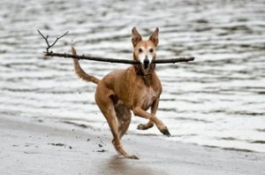 I Has A Stick